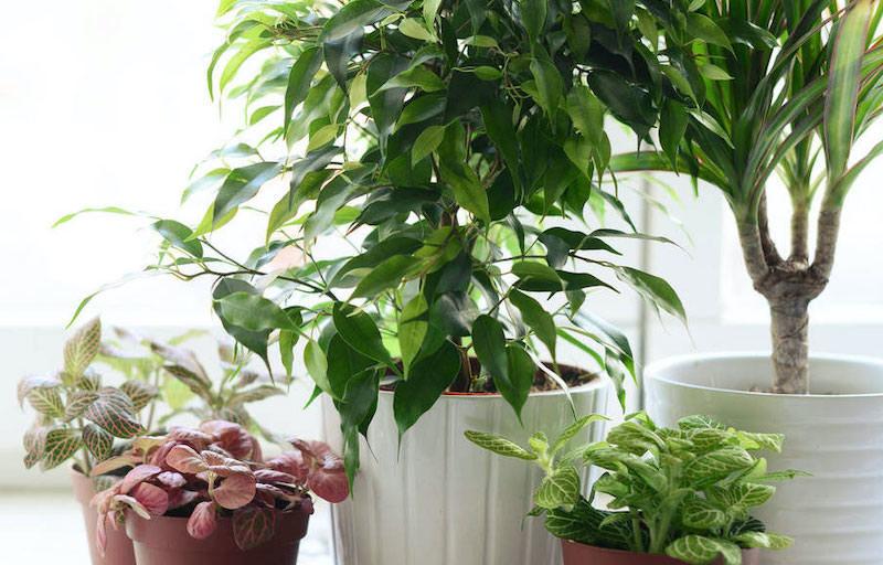 plantas-artificiales-corel-ltda-1